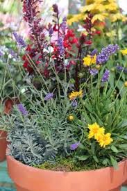 Fragrant Container Plants - fragrant herb container combinations gardens ideas and herbs