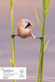 33 best plants for birds amazon com audubon birder u0027s engagement calendar 2018