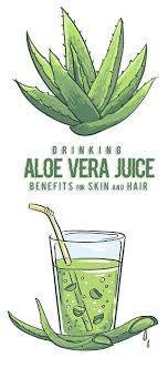 aloe vera plant facts how to prepare aloe vera juice and benefits aloe juice and remedies