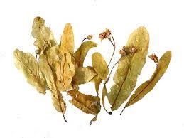 linden flower linden flower leaf and seed of bodhi tree esgreen enjoy