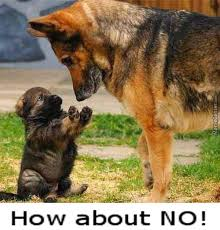 How About No Meme - puppy how about no out cutes bear no by toshio777 meme center