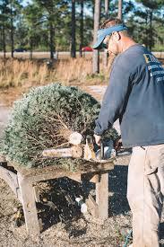 Christmas Trees Nc Christmas Trees In Leland Patrick Tucker From Mahogany Rock Tree