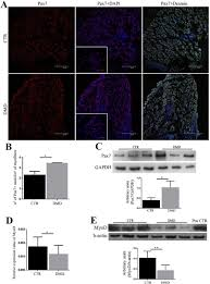 inositol 1 4 5 trisphosphate ip3 dependent ca2 signaling