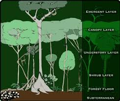 Dominant Plants Of The Tropical Rainforest - tropical wet climate types for kids