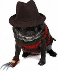 Spider Dog Halloween Costume Halloween Costumes Pity Bull Extra Small Cat Dog Costume