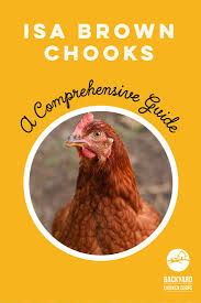 15 best chickens of 2016 images on pinterest chicken coops