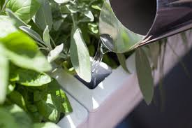 glowpear mini wall planter self watering vertical garden planter