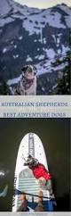 is an australian shepherd smart why the australian shepherd is the best adventure dog long haul