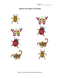 picture matching worksheets insects kidschoolz