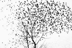 a large flock of birds flying away from the trees stock photo