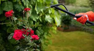 cura giardino quali sono i trattamenti fitosanitari per la cura giardino