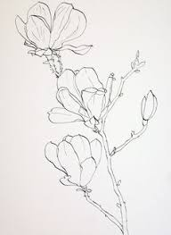 cyclicillusions some contour drawings from my drawing botanicals