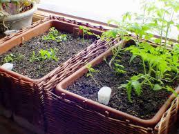 Indoor Kitchen Garden Ideas Diy Indoor Herb Garden Ideas