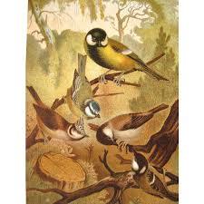 Birds Home Decor 1885 Chromolithograph Bird Print By Louis Prang Titmice Home