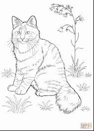 astounding funny cat coloring pages with cats coloring pages