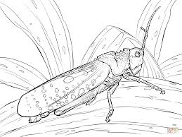grasshoppers coloring pages free coloring pages
