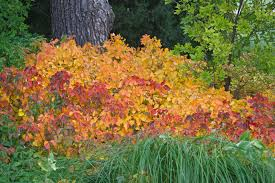 poison ivy yard plants animals northeast colorado