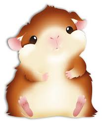 cute fat guinea pig fat guinea pig by see past the madness on