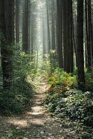 wood of peace flanders fields