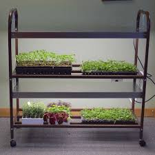 intense light grow shelves for your indoor growing