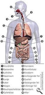 bauchspeicheldrüsenschwäche symptome die bauchspeicheldrüse natürlich entgiften besser gesund leben