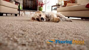 Ayos Laminate Flooring Carpet With Pad 1 98 Sqft Installed U2013 Flooring Direct