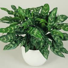 100 plants that don t need sun houseplants that don t need