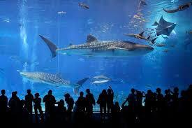 japanese aquarium world in pictures september 18 2013 japanese aquarium and a room