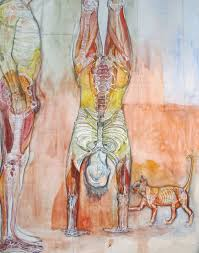 Right Side Human Anatomy Upside Down Right Side Up In A Human Or In A Cat U2013 I Have