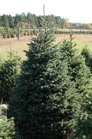 black spruce cochrane tree company llc