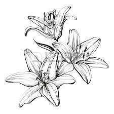 3 194 pencil sketch of garden stock illustrations cliparts and