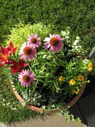 Vegetable Container Garden by Www Haycositalinda Co Pot Garden Ideas Pictures Ch