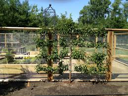 Build Vegetable Garden Fence by Vegetable Garden Fencing Dirt Simple