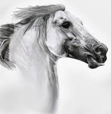 horse pencil drawing sketch horse on white background detailed