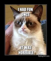 Grumpy Cat Meme I Had Fun Once - 84 best grumpy cat images on pinterest chistes cat stuff and