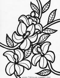 hawaiian flower coloring pages coloring pages online