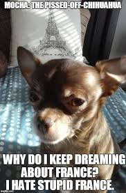 Funny Chihuahua Memes - mocha the pissed off chihuahua chihuahua overflow board pinterest