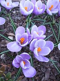 Best Spring Flowers - 21 spring flowers for your garden early spring pink purple and