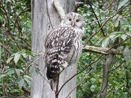 owl on tree domain free photos for 3264x2448