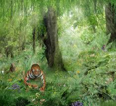 tiger in the jungle by yoklmn on deviantart