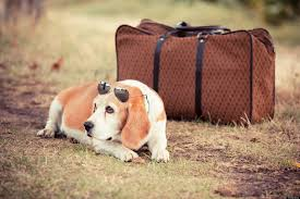 traveling with pets images 9 of the best airlines for a totally stress free holiday with your pet jpg
