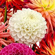 bulk flowers wholesale flowers bulk wedding flowers online bloomsbythebox