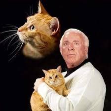Ric Flair Memes - because imgur needs ric flair holding a cat imgur memes