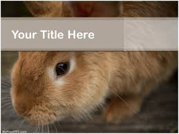 free rabbit powerpoint templates myfreeppt com