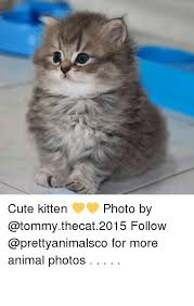 Cute Kitten Memes - 25 best memes about cute kittens cute kittens memes