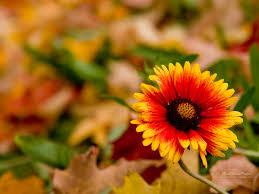 autumn flowers autumn field flowers google search autumn pinterest autumn