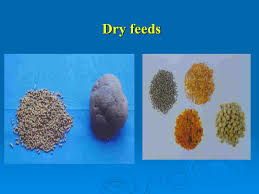preparation of ornamental fish feed preparation of feed using