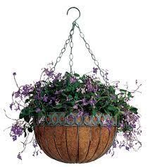 Hanging Plant Amazon Com Austram 112778 14 Inch Antique Green Round Queen Anne