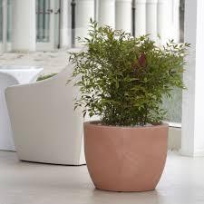 vasi da interno vaso per piante da interno ed esterno hera nicoli