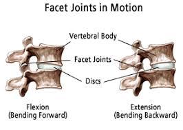 Anatomy Of Vertebral Body Explaining Spinal Anatomy